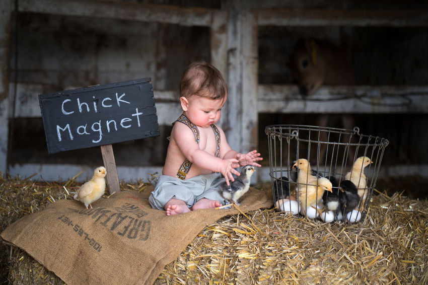 Chick Magnet A portrait photographer from Minnesota, I delve into what's out of the ordinary, unique and interesting. My quest is to draw the viewer of a portrait into the elements of the piece through emotion; laughter, nostalgia, joy, or sadness. Chick Magnet Farm Animals Playing With The Animals The Portraitist - 2018 EyeEm Awards Baby Chicks Baby Photography Child Childhood Children Photography Children Portraits Cute Day Front View One Person Playing Portraiture Toddler Photography
