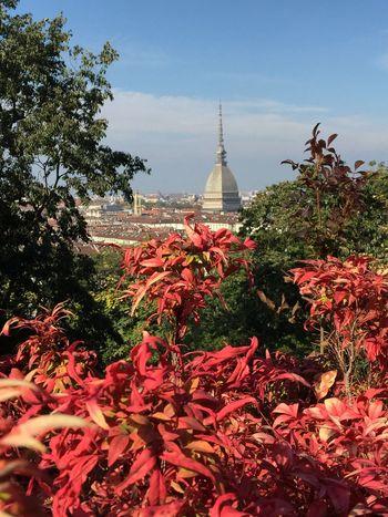 View of Mole Antonelliana Mole Antonelliana EyeEm Italy Fall Colors Fall Turin Italy Torino