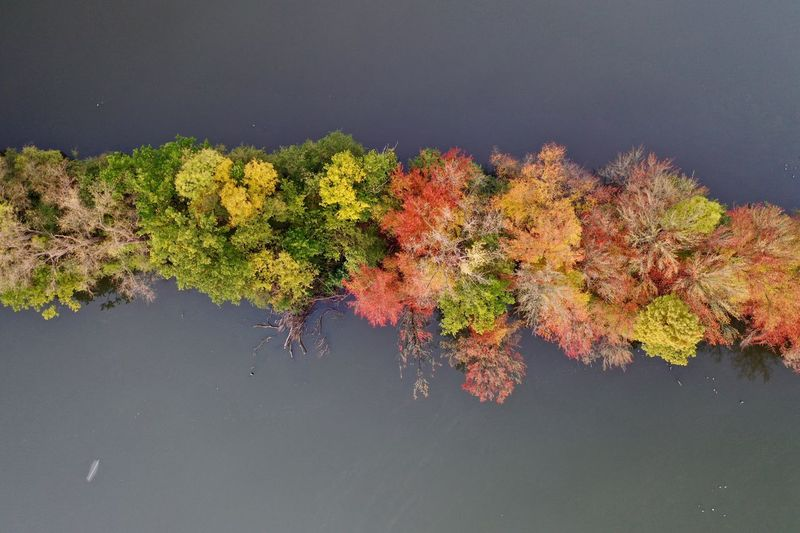 Aerial view of autumn trees in lake
