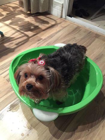 Tomando banho de balde