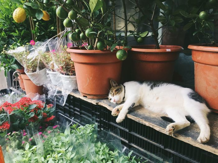 Pet Portraits Potted Plant Domestic Cat Cat Pets Mammal Domestic Animals One Animal Chilling Relaxing Napping Cat Lazy Lazy Cat