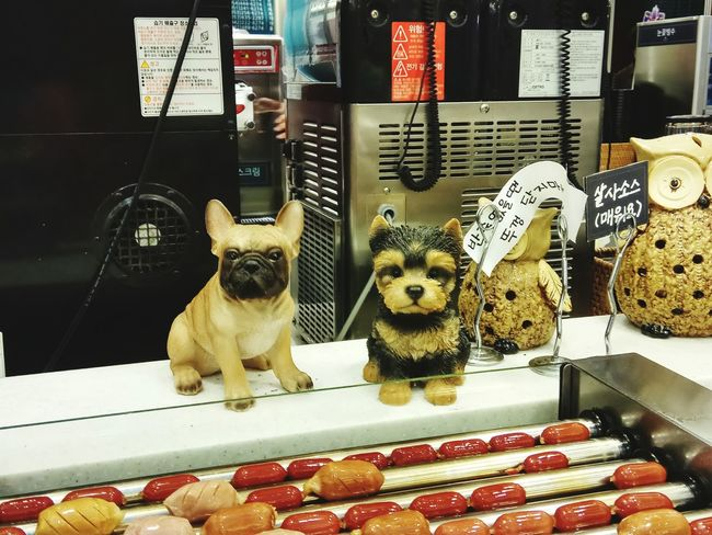 Dog Domestic Animals Shelf Animal Themes Indoors  Mammal Food Toy