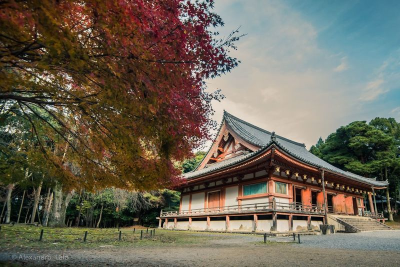Hello autumn Japan Photography Japan Autumn Colors Autumn Tree Architecture Built Structure Day Religion Building Exterior Place Of Worship Travel Destinations No People Outdoors Roof Sky Nature