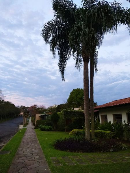 Coconut Trees Coconut City Sky Tree No People Day Nature Landscape Beauty In Nature Tranquility Céu Dia Coqueiros