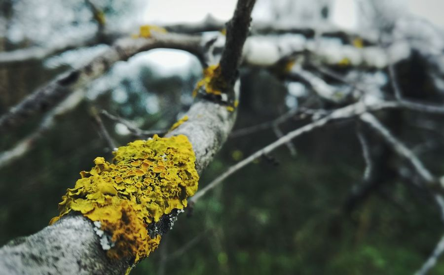 Close-up Branch Yellow Mossy Tree Beauty In Nature Nature Green Color Moodyphotography Wood Background
