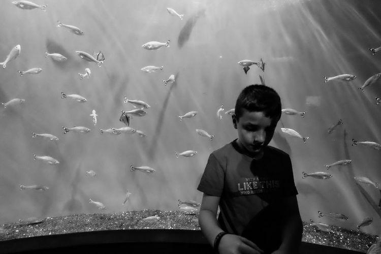 Thoughtful boy against fish in aquarium
