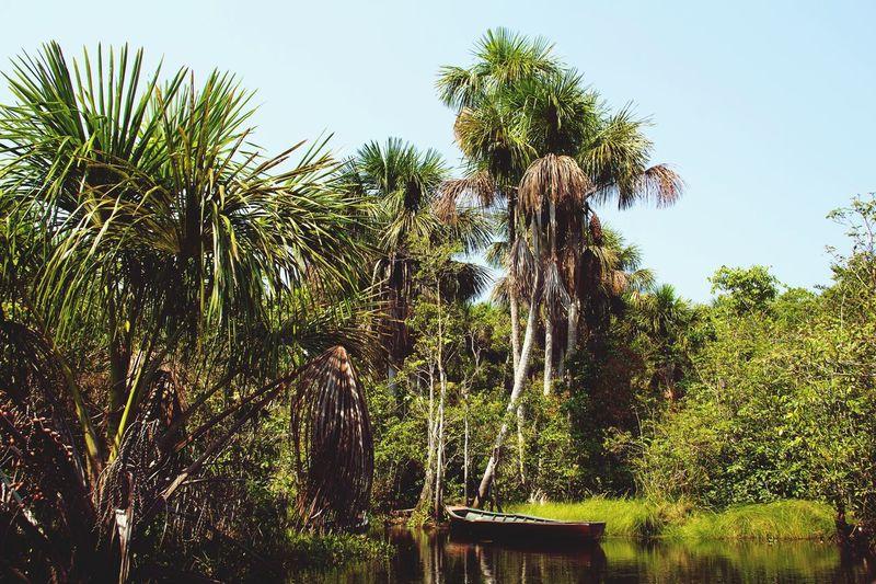 Growth Palm