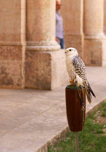 Bird of prey EyeEm Selects Bird Animals In The Wild Animal Themes Perching Animal Wildlife One Animal Day Bird Of Prey
