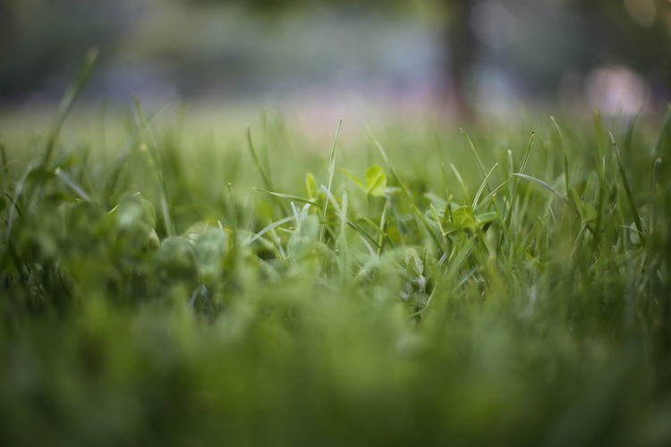 Close-up of grassy field