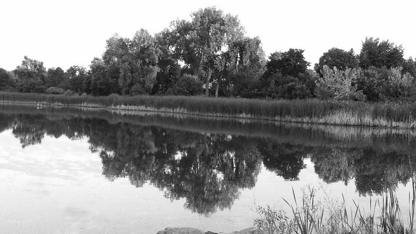 Shades Of Grey My Own Photography Black And White Photography Tree_collection  Nature Photography Water_collection Water Reflections Lake View