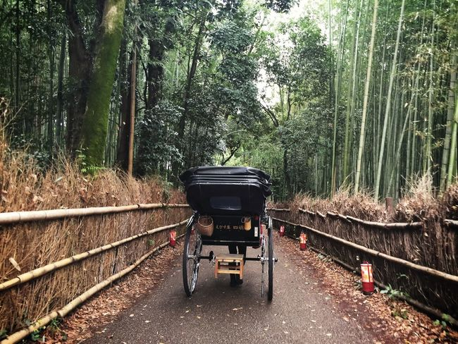 A rickshaw puller with tourists among the Kitasaga Bamboo Grove near Nonomiya Shrine in Kyoto Traveling Nature Kx2014