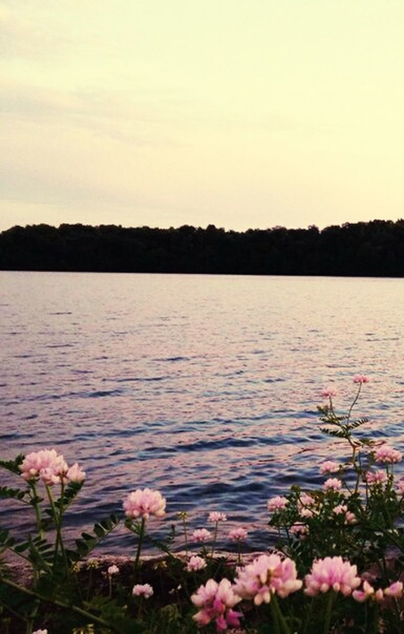 flower, nature, lake, beauty in nature, water, no people, plant, growth, tranquility, scenics, outdoors, tranquil scene, fragility, sky, freshness, landscape, leaf, tree, day, clear sky, flower head