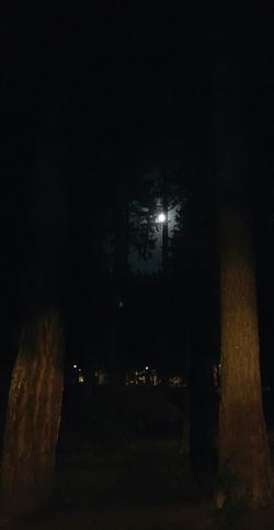 The moon coming through the trees at night. Walking Around Taking Photos Urban Nightsky Hugging A Tree Excercising Escaping Night Sky Two Is Better Than One