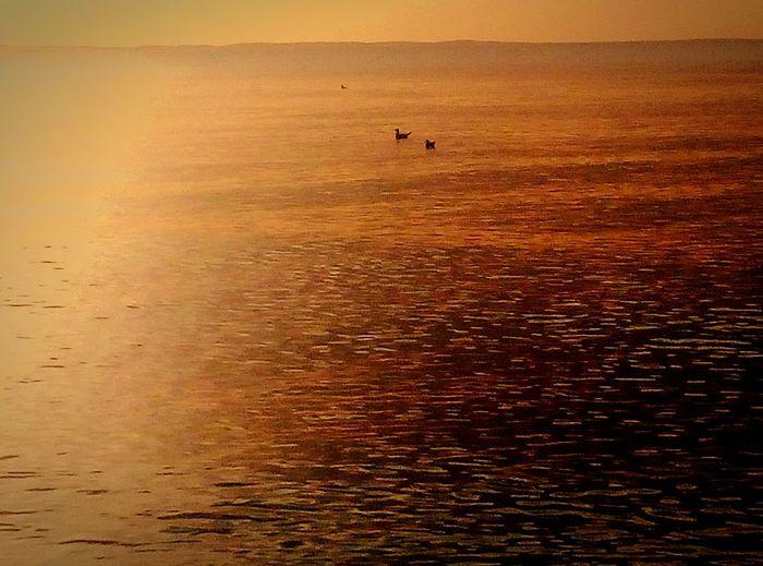 Sunrise N