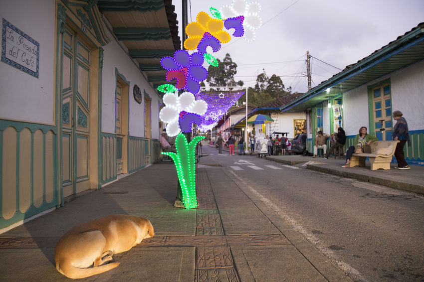 Street scene from Salento, Quindio. Salento is the main tourist hotspot in Colombia's coffee region. Colombia Animal Themes Coffee Region Day Dog Mammal Outdoors Salento Small Town Streetphotography