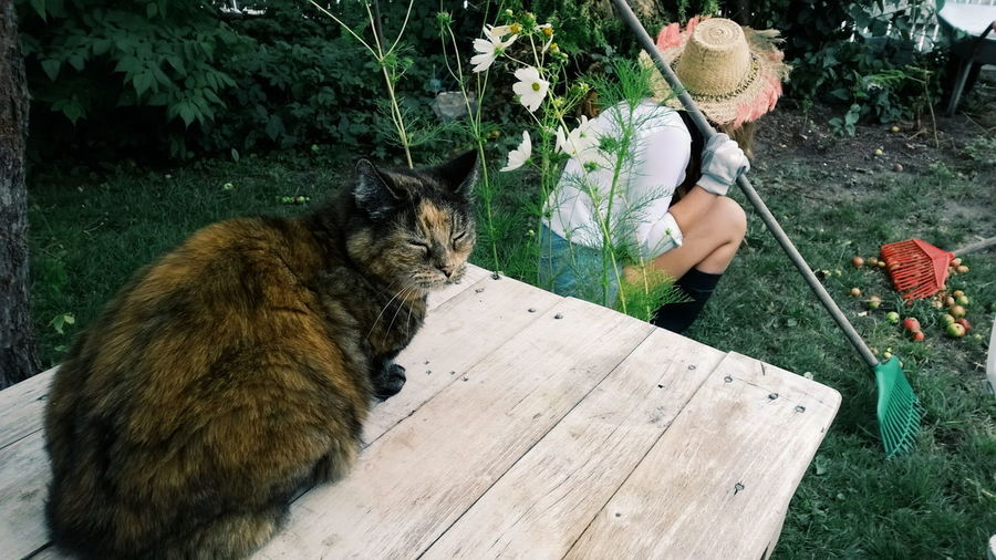 Cat relaxing on table by woman crouching with rake in yard