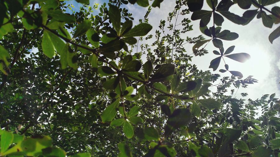 Low angle view of tree leaves against sky