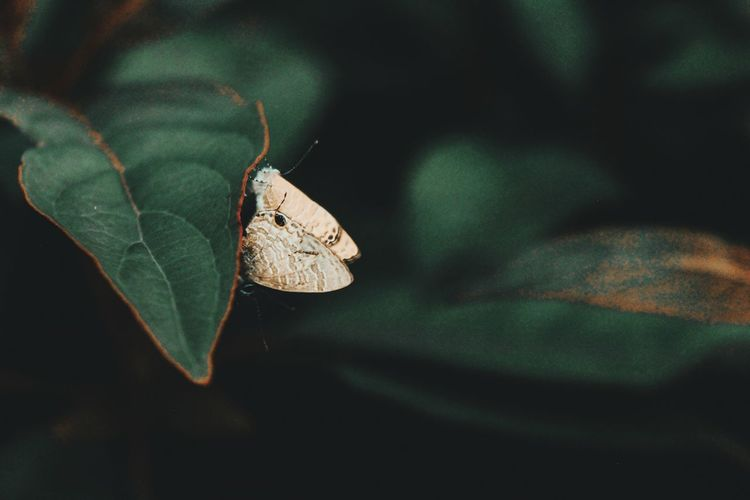 Moth EyeEm Selects Leaf Butterfly - Insect Insect Close-up Animal Themes Green Color Moth