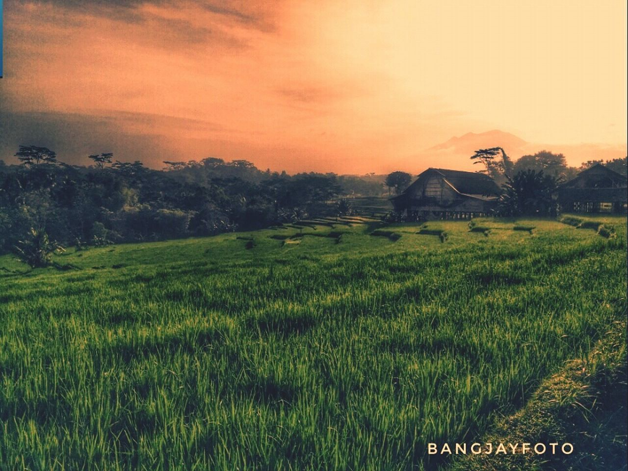 field, agriculture, sunset, landscape, tranquility, scenics, rice paddy, nature, no people, growth, crop, grass, beauty in nature, green color, outdoors, sky, tranquil scene, tree, rice - cereal plant, architecture, rural scene, cereal plant, day, irrigation equipment