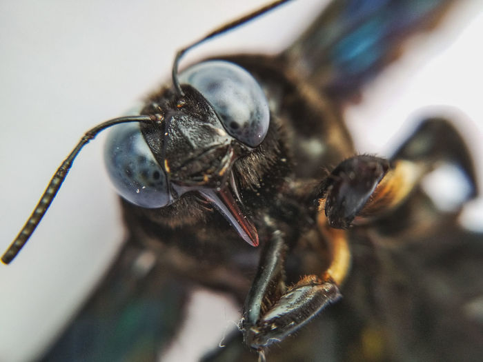 Macro Eyes Macro Insects Insect Close-up Focus Animal Eye Animal Antenna