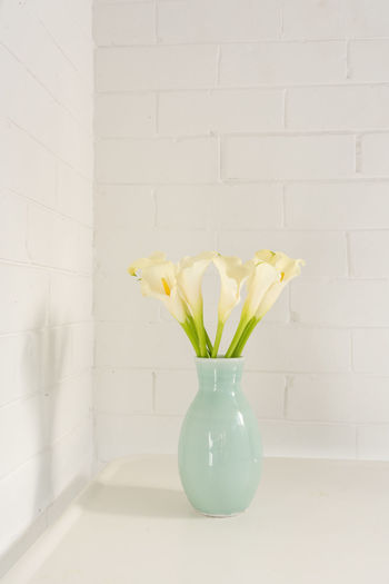 Close-up of white flower in vase against wall