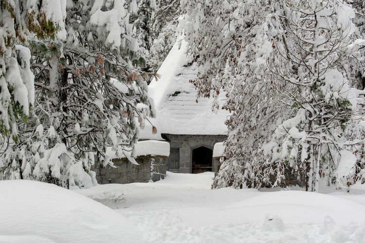 Close-up on snow-covered coniferous trees and Yosemite Valley Chapel at Yosemite National Park, California, USA, featuring snow landscapeviewed from the side Snow-covered Snow Covered Yosemite Valley Chapel Pine Fur Coniferous Trees Tree Forest Vegetation Landscape White Cold Winter Season  Seasonal Background Backdrop Bush Bushes Purity Pure Day Dense Side View Weather Nobody No Person Sierra Nevada Sierras Structure Building Covering National Park California USA West Coast Close-up Close Cold Temperature Extreme Weather Outdoors Scenics - Nature No People