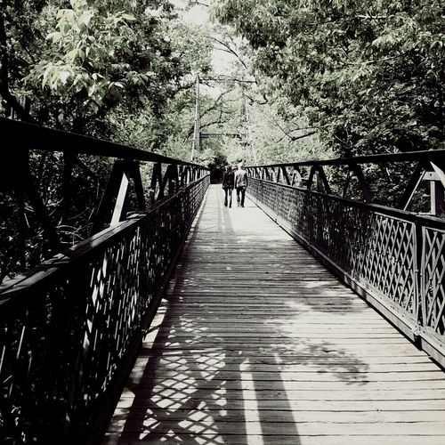 Trees Bridges Outdoors Lovers Stroll Where To Go