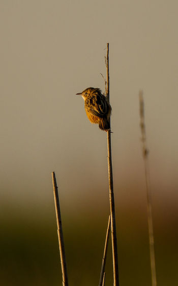Close-up of bird perching on plant against sky