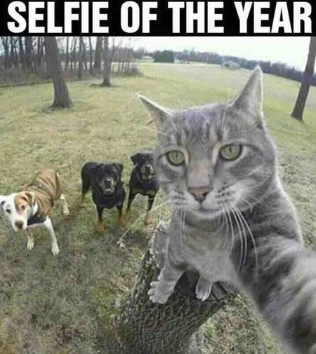 Relaxing Taking Photos Hi! Check This Out Hanging Out Hello World Cheese! Relation  Gigs ....GRV!!!! Nature Love ♥ G!g$ Selfie ✌ Selfiesaturday Selfie Of The Day Selfie Of The Year Cat Dog