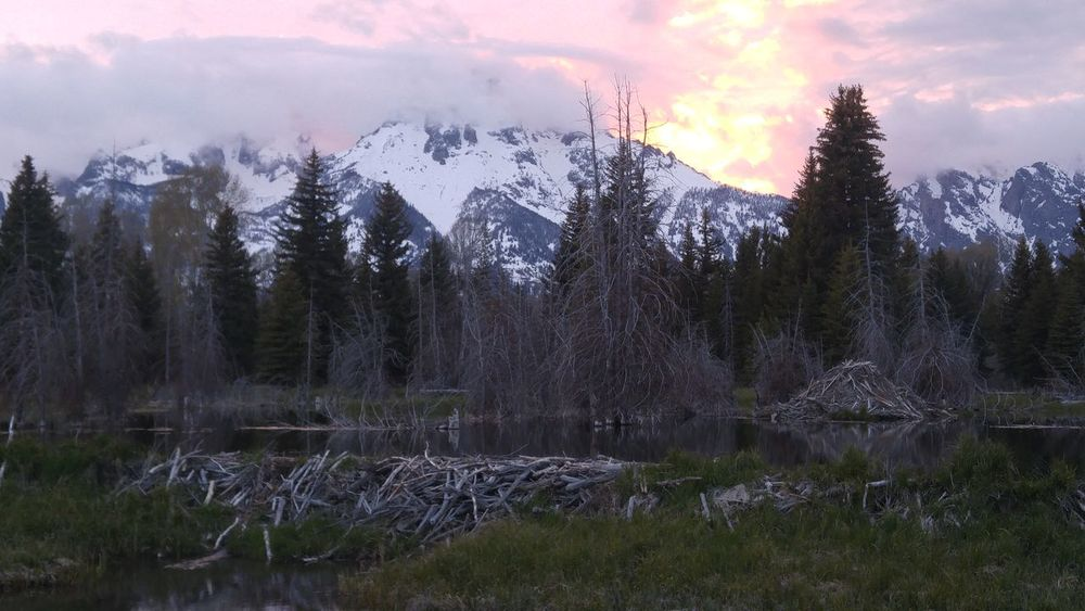 Grand Teton National Park  Beaver Dam Beaver Work Nature Beauty In Nature No People Mountain Cold Temperature Tree Outdoors Snow Winter