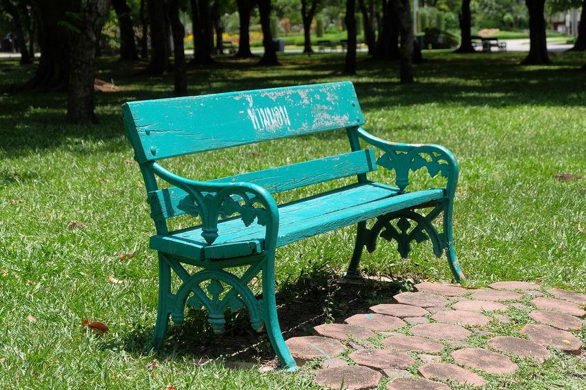 bench in park Bench Chatuchak Chatuchak Park Garden Grass Green Greensward Lawn Nature Park Plant Public Public Park Relax Relaxing Tree