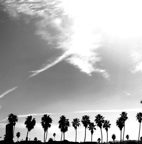 Palms Palm Tree Sky Blackandwhite Tree Plant Silhouette Nature Sky Low Angle View Palm Tree Cloud - Sky Tranquil Scene Day No People Tropical Climate Outdoors Scenics - Nature Tranquility Growth Beauty In Nature Sunlight