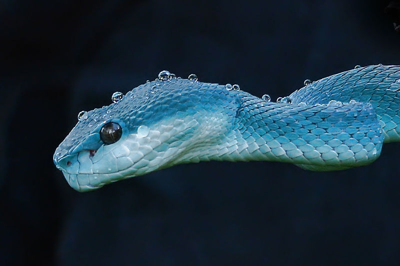 Close-up of wet turquoise snake outdoors