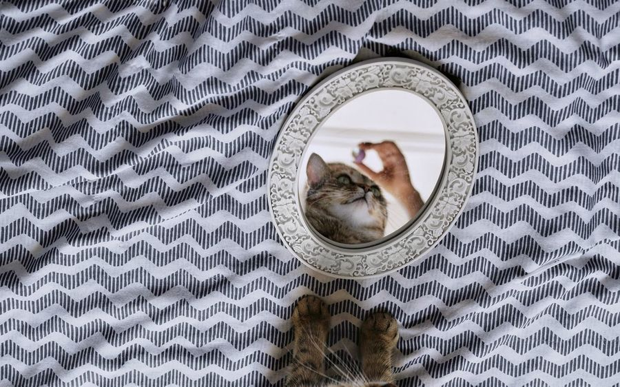 Promises. Cat Domestic Cat Mirror Mirror Reflection Reflection Close-up Personal Perspective Feline Vanity Mirror Ginger Cat At Home