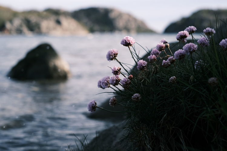 Close-up of pink flowering plant in sea