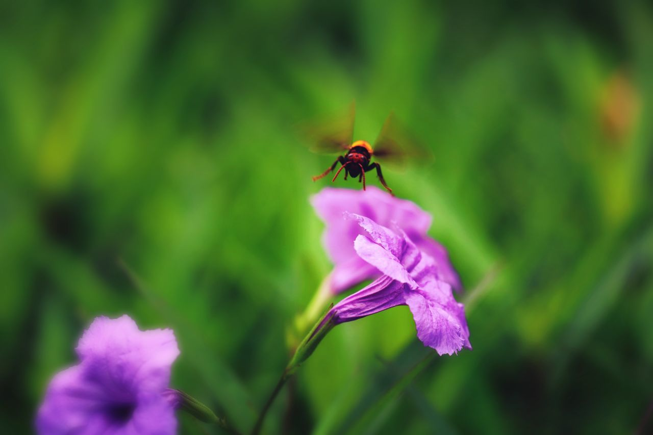 flower, insect, nature, petal, purple, fragility, growth, beauty in nature, plant, animals in the wild, animal themes, one animal, no people, close-up, outdoors, flower head, day, freshness