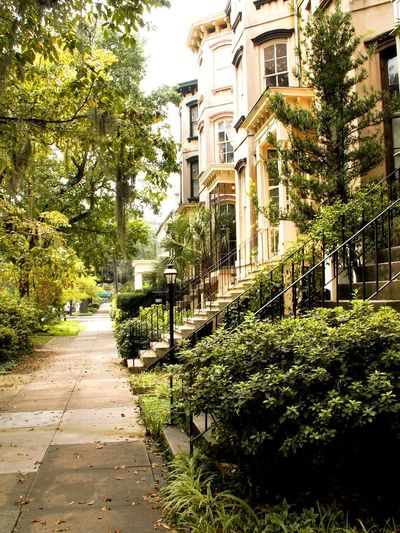 Lush plantings along a typical street in this charming city. Architecture Building Exterior Built Structure City Coral Color Day Green Color Growth Nature No People Outdoors Plant Railing The Way Forward Tree