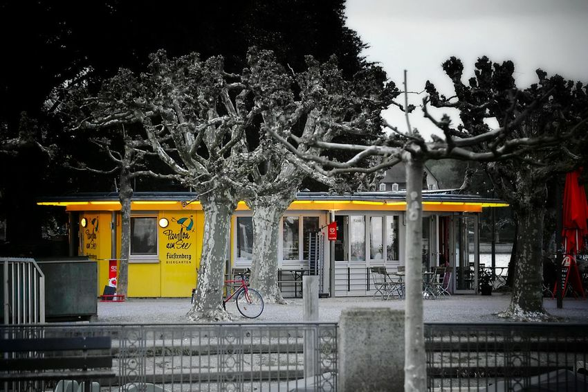 Tree Architecture Built Structure Taking Photos Land Vehicle Transportation Urban Geometry Urban Photography Urban Urban Landscape Colorkey Architecture_collection Mode Of Transport Bysicle Yellow Red Blackandwhite Photography Tranquility Outdoors Light And Shadow Architecture Details Mypointofview Black & White Monochrome Photograhy The Street Photographer - 2017 EyeEm Awards Your Ticket To Europe Paint The Town Yellow