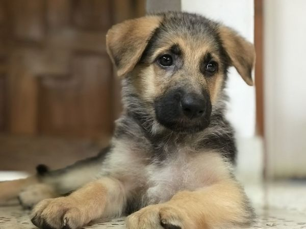 Dog Pets Animal One Animal Puppy Cute Eye Looking At Camera Sitting Portrait Domestic Animals Young Animal Outdoors Ear Day No People Mammal Animal Themes Close-up Pet Portraits