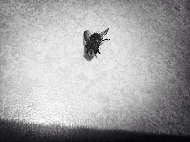 Post Mortem Bugs Blackandwhite Disgusting