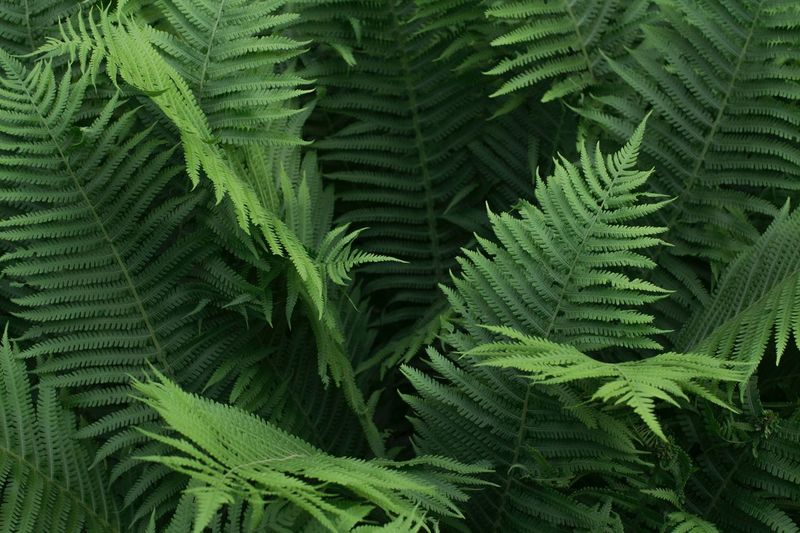 Fern background Jungle Monochrome Fern Fern Leaves Natural Background Dew Tropical Plants Nature Forest Green Color Leaf Plant Part Growth Plant Fern Nature Day Close-up Pattern Natural Pattern