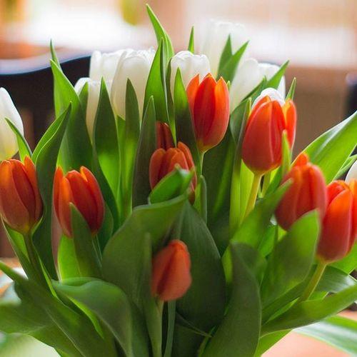 Wiosna w domu😊🌹 Dom Rodzinny Kwiaty Flowers Flower Tulipany Dla Mamy  Mum Tulips Beautiful Beauty Orange White Home Homesweethome Walentynki Valentines Dekoracje Decor Wiosna Spring Polishgirl Poland Likeforlike l4lf4f