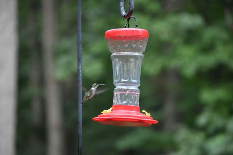 Hummingbird By Bird Feeder