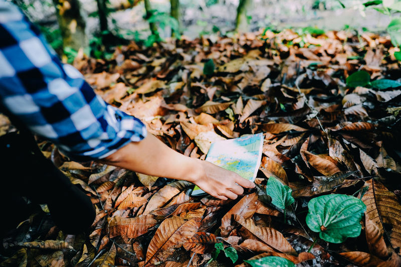 Cropped hand of woman putting map on dry leaves in forest