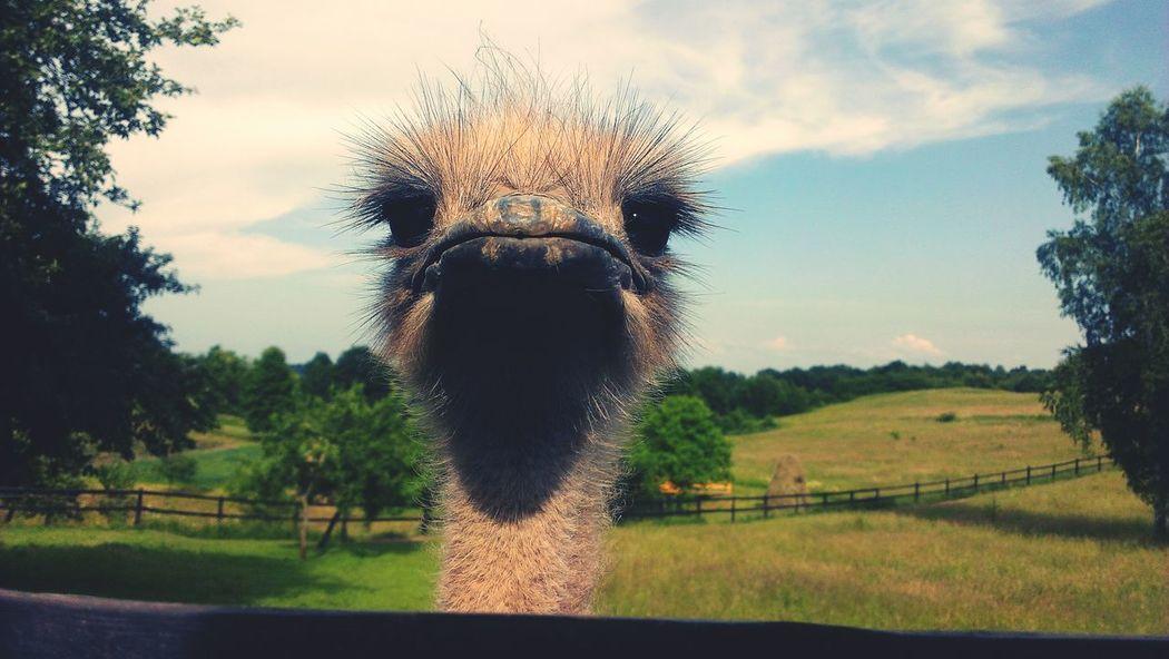 Катались по горах на великах і зустрів в карпатах нєжданчик) страус птах птица нежданчик