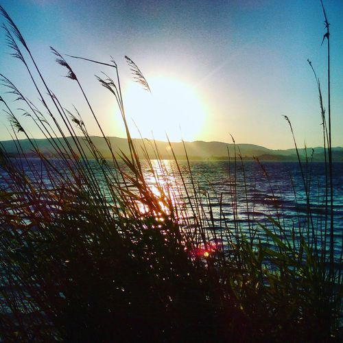 Summertime Summer Views Sea And Sky Waves, Ocean, Nature Waves Crashing Plants And Flowers Sudness  Summertimesadness Blue Sky Blue Wave Green Color