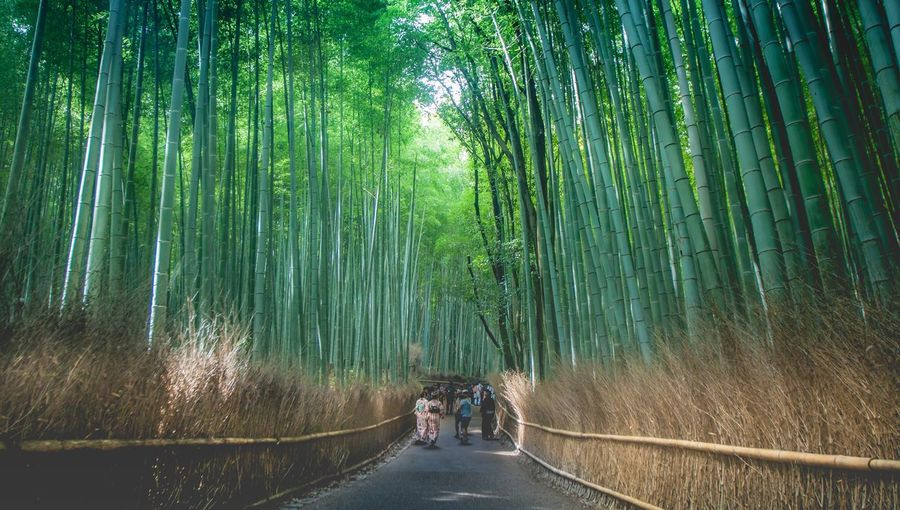 People Amidst Bamboo Trees In Forest
