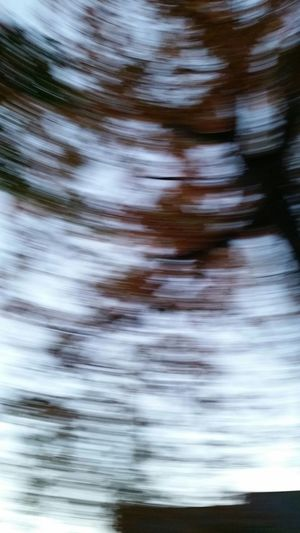 Glitch I dropped my phone as I was taking a Picture of the Changing Seasons and it made the leaves look Swirly