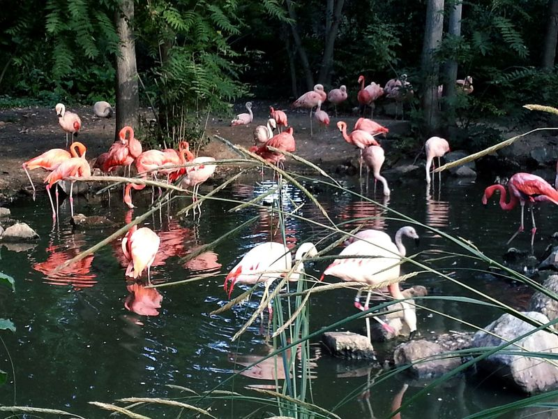 Water Lake Flamingo Tree Bird Reflection Nature Growth Zoo Zoology Zoo Animals  Togetherness Beauty In Nature Pink Color Flower Springtime Water Bird Day Waterfront Tranquility Tranquil Scene Animals Pink Birds Put A Bird On It