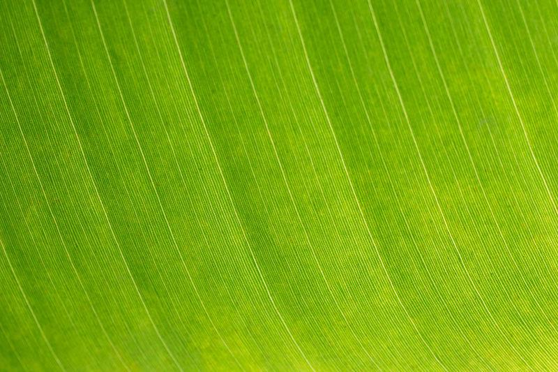 Close-up Fragility Gleen Green Color Leaf Nature Plant